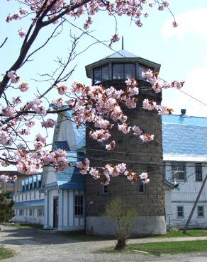 サイロ隊舎と桜370.jpg