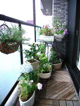 南側ベランダの花概観370.jpg