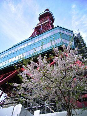 桜とテレビ塔1370.jpg