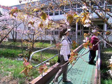 桜④360.jpg