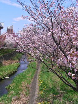 桜ー②360.jpg