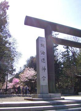 桜北海道神宮鳥居360.jpg
