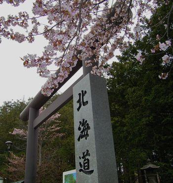 神宮の桜その1/370.jpg